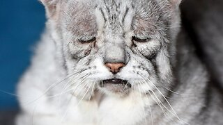 Sour puss! Cat has a syndrome making him look permanently sad