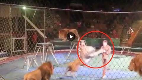 Leeuwen vallen trainers aan TIJDENS circus act