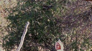 Wild bird loves receiving a cool down body spray from woman in garden