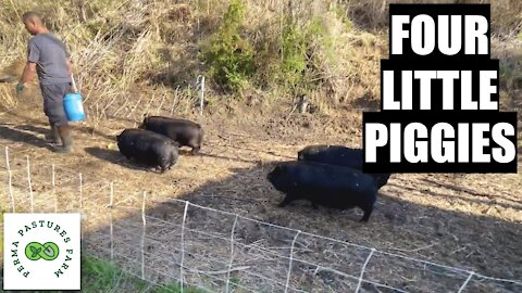 Managing Our Forest With PIGS!