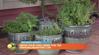 Melinda's Garden Moment - Grow your own herbs for tea