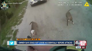 Teen, elderly man attacked by pack of dogs
