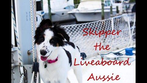 Skipper the Liveaboard Aussie