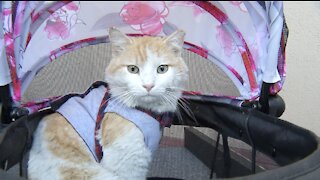 Pet of the week: loving 8-month-old kitten fits any home