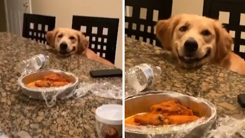 Adorable puppy literally smiles for tasty chicken wings