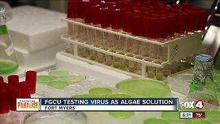 FGCU testing virus as blue-green algae solution
