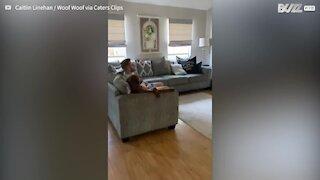 Dog sits like a human watching television