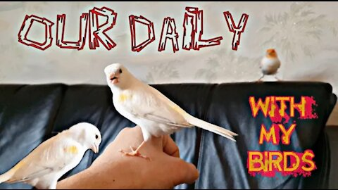 A day with my birds