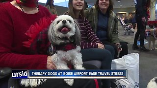Boise Airport Go Team therapy dogs