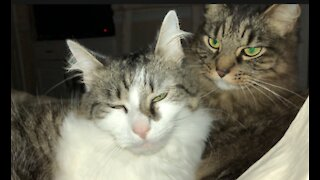 Relax....Sixty Seconds of Kitty Love!