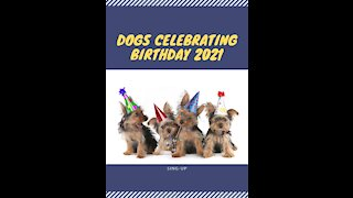 Dogs Celebrating Birthday 2021