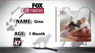 FOX Finders Pet Finder - Gino