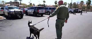 Police K-9 recovering after stabbing