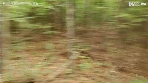 Árvore arruma motociclista durante corrida