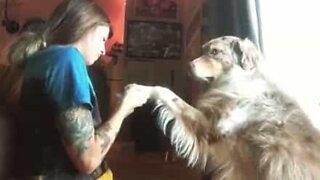 Os cães também têm direito a manicure