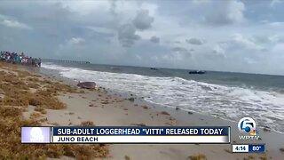Rehabilitated sea turtle released at Juno Beach