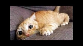 💗MUST WATCH Cute And Funny Pets