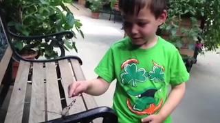 A Tot Boy Runs Away From A Butterfly