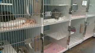 Colorado lawmakers introduce new bill to stop euthanization of healthy, well-tempered pets