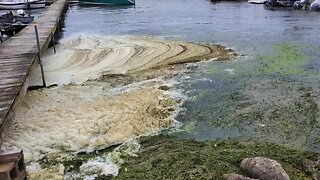 Algae blooms are a growing concern
