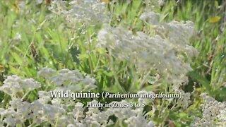MELINDA'S GARDEN MOMENT - USING NATIVE FLOWERS