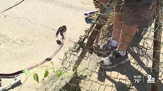Private citizen helps fix woman's property after trash truck hits fence