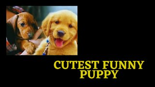 Funny Cutest dog 🐕 🐶