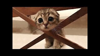 Aww cute and funny Cats
