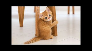 Funny Cats Video Compilation 2