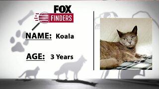 FOX Finders Pet Finder - Koala