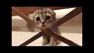 Cute animals and funny reaction