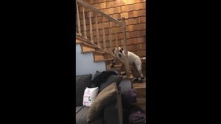 Dog's priceless reaction after trying on new shoes