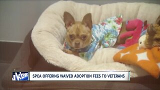 SPCA offering waived adoption fees to veterans
