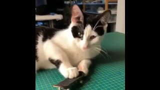 Check out this kitten's epic (and hilarious) toy skateboarding skills