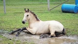 Adorable colt loves splashing in water puddle