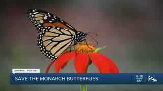 Save the monarch butterflies