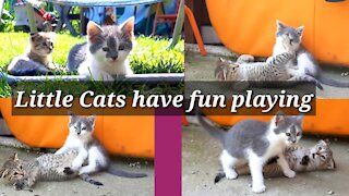 Little Cats have fun playing