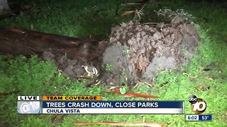 Falling trees prompt park closures in South Bay