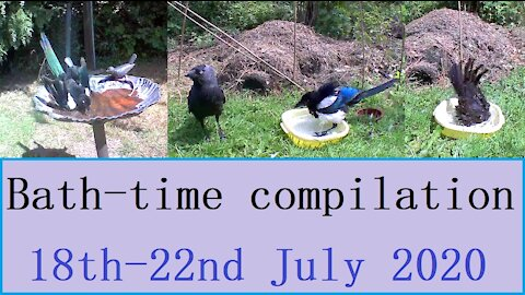 British garden birds - bath time compilation 18th-22nd July 2020