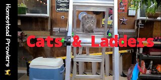 Homestead Cats Cirque du Soleil
