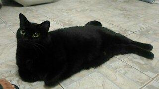 Black Cat history
