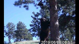 Bear Trouble 2