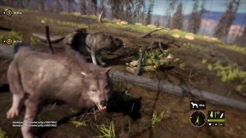 the Hunter: Call of the Wild - Running with the Wolves