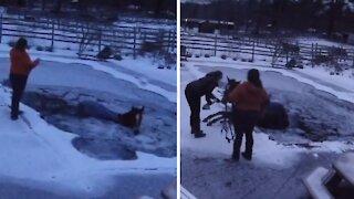 Horse accidentally falls into frozen backyard pool