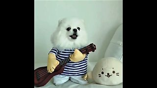 Pomeranian puts on hilariously adorable show