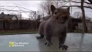 Squirrel gets up close and personal with the camera while looking for a snack