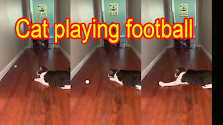 Cat playing football with me