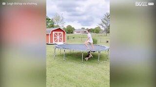Cão diverte-se em trampolin de forma diferente