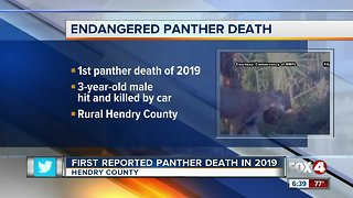 Panther Death LaBelle