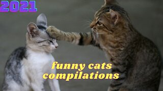 Funny cats compilations 2021 | funny cats motel!